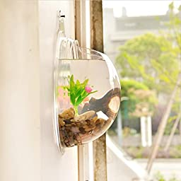 YSTD® Pot Wall Hanging Mount Bubble Aquarium Bowl Fish Tank Aquarium Home Decoration (Transparent)