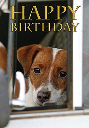 Jack-Russell-Dog-Birthday-Greeting-Card