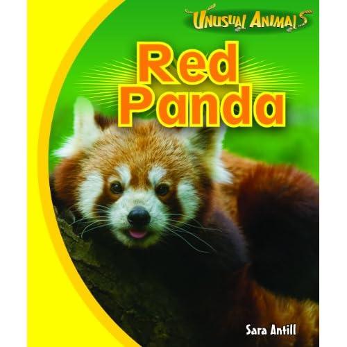 Red Panda (Unusual Animals)