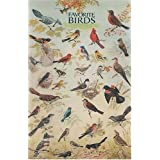 Bird Species Educational Poster Print