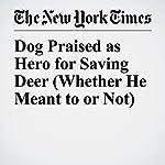Dog Praised as Hero for Saving Deer (Whether He Meant to or Not) | Sarah Maslin Nir
