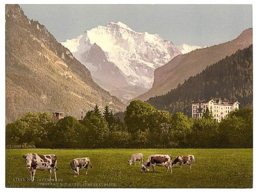Jungfrau and Jungfraublick Hotel, Bernese Hotel, Switzerland wall sized poster (photochrom) photochrome measured in inches. WHOLESALE package of 25 posters.