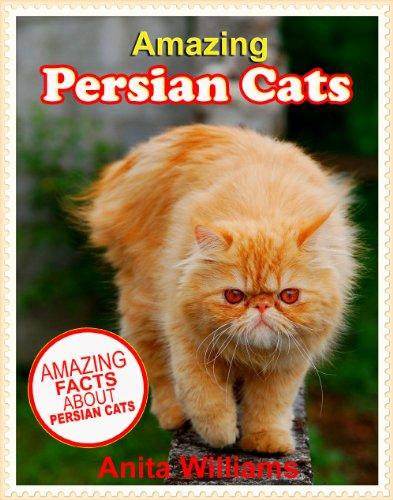 human urine cat deterrent