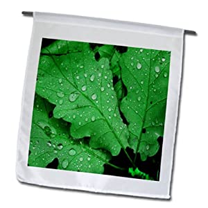 Yves Creations Colorful Leaves - Three Bright Green Leaves Water Drops - 12 x 18 inch Garden Flag (fl_15465_1)