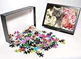 Photo Jigsaw Puzzle of Cat - grey kitten...