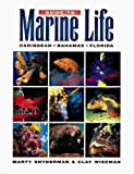 img - for Guide to Marine Life: Caribbean-Bahamas-Florida by Snyderman, Marty, Wiseman, Clay (April 24, 1996) Paperback book / textbook / text book