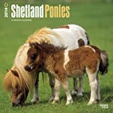 Shetland Ponies 2014 Calendar: 18-month (Multilingual Edition)
