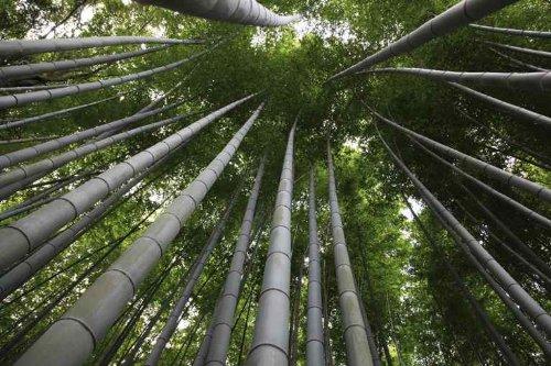 Designer Stuhl Aus Bambus Nachhaltigkeit Und Innovation Von Moso