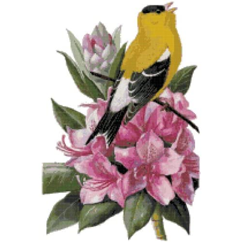 Amazon.com: Washington State Bird and Flower Counted Cross Stitch