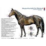 Akupunkturtafel für Pferde 8: Traditionelle Akupunkturpunkte