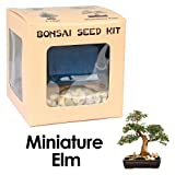 Eves Miniature Elm Bonsai Seed Kit, Woody, Complete Kit to Grow Elm Bonsai from Seed