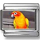 Sun Conure Parrot Photo Italian Charm