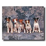 Jack Russell Terrier Puppy Dog Animal Home Decor Wall Picture 16x20 Art Print