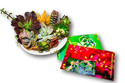 Fat Plants San Diego Ten Gorgeous Succulent Cuttings