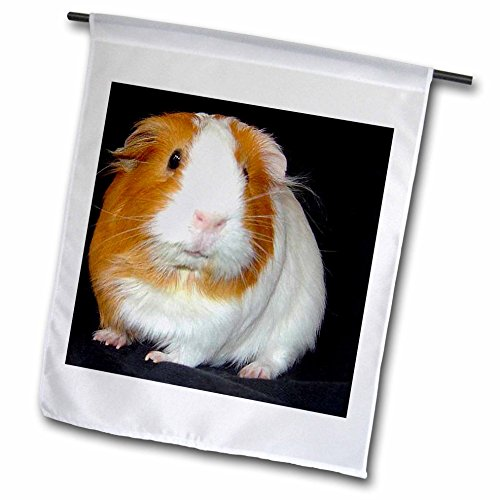 Guinea Pig, Garden Flag, 12 by 18-Inch