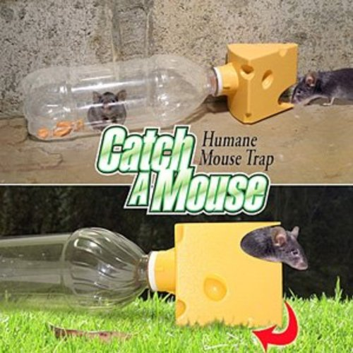 how to set a humane rat trap