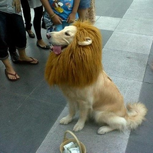 Narro (Dog Costumes Lion King)