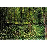 (13x19) Vincent Van Gogh Trees and Undergrowth Forest Art Print Poster
