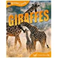 Giraffes (Animal Lives (Teacher Created Resources))