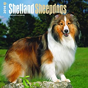 Shetland Sheepdogs - 2014 Calendar