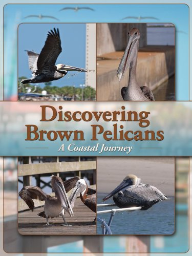 Discovering Brown Pelicans: A Coastal Journey