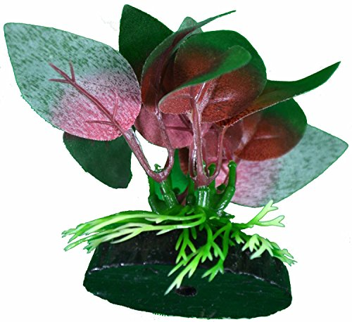 Betta Plant Red Anubias Leaf By Blue Spotted, Great For Betta Fish
