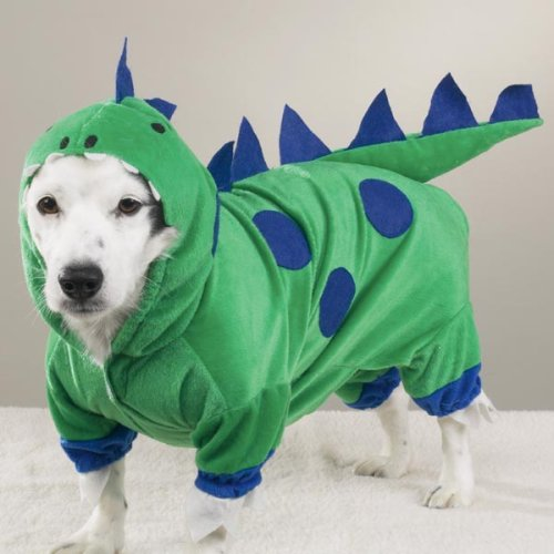 Dog Dinosaur Halloween Costume - Medium - Pet