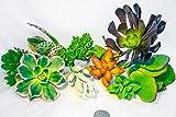 Fat Plants San Diego Ten Gorgeous Succulent Cuttings