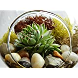 Succulent Terrarium with Moss and River Rocks