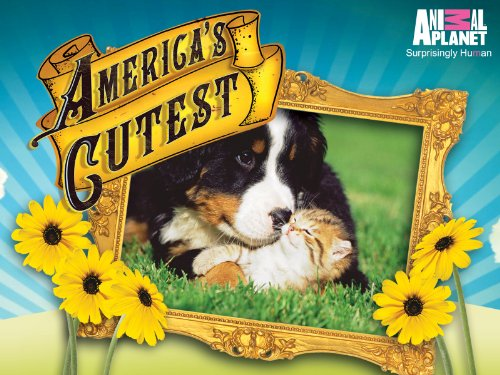 America's Cutest Season 2