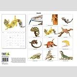 Various Lizards A4 2014 Calendar