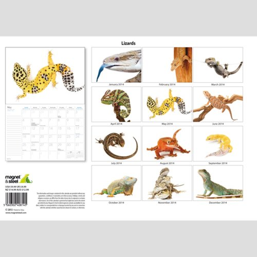 Lizards 2014  Wall Calendar