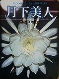 【花なし・開花見込み株】月下美人の大苗(6号)