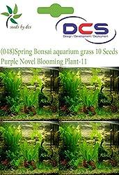 DCS (048) Spring Bonsai aquarium grass 10 Seeds Grass-Purple Novel Blooming Plant-11