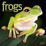 Frogs Calendar 2017