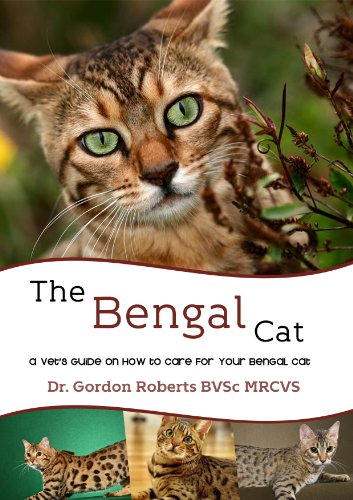bengal cat new brunswick canada