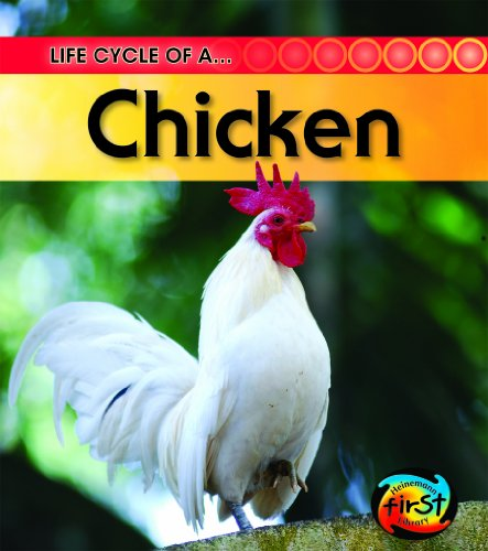 Chicken (Life Cycle of a . . .)