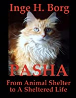 Pasha, From Animal Shelter to A Sheltered Life