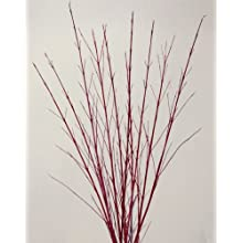 Red Dogwood 3-4 Feet Tall. Bunch of 15 stems
