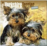 BrownTrout Publishers Ltd. Yorkshire Terrier Puppies 2015 Wall Calendar