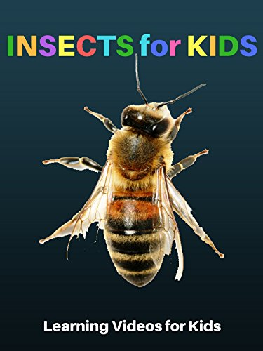 Insects for Kids: Learning Videos for Kids