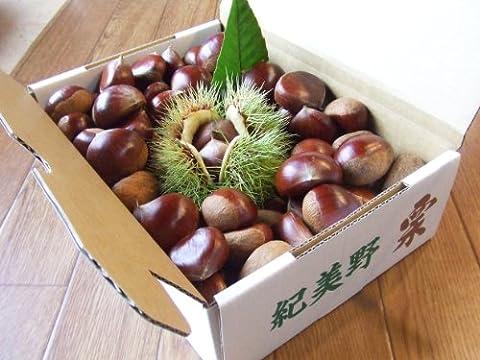 和歌山紀美野 マルイチ農園の栗 2kg【ご予約受付中】