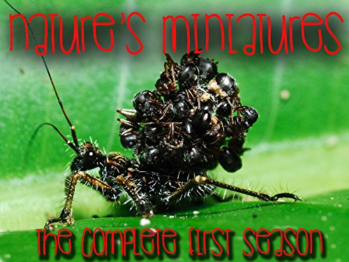 Nature's Miniatures - The Complete First Season