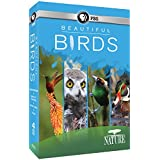 Nature: Beautiful Birds [Import]