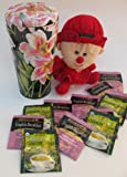 Christmas Gift, Stocking Stuffer Black Tin with White Flowers and Plush with Bigelow Green & Black Tea Bags