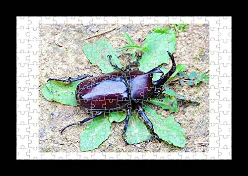 puzzle-style-pre-assembled-wall-print-of-japanese-rhinoceros-beetle-by-lisa-loft