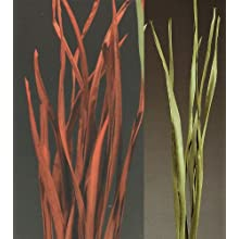Green Floral Crafts Burileaf Cane Leaves 4.5-5 ft or 6- 6.5 Feet Tall, Package of 20