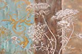 White Poppy and Queen Annes Lace II by St. Jean, Nora - Fine Art Print on CANVAS : 48.75 x 33 Inches