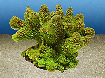 Nature's Image Artificial Corals: Pocillopora Green