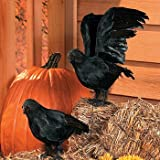 Realistic Feathered Crows Halloween Decor